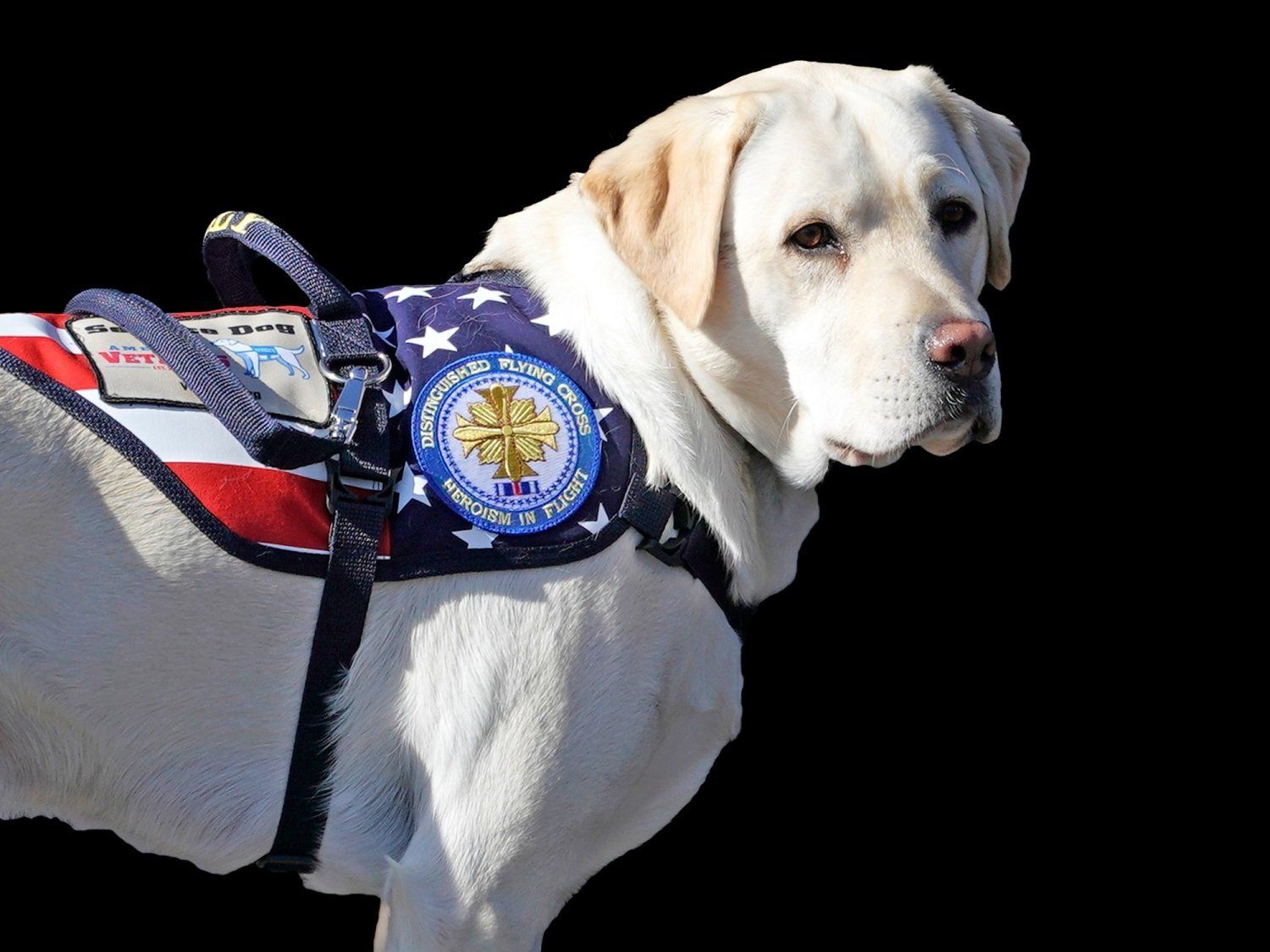 Sully, former President George H.W. Bush's service dog, graphic element on black