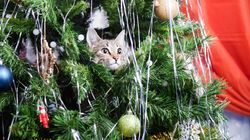 Our Christmas Trees Are Up – And Cats Are Already Destroying