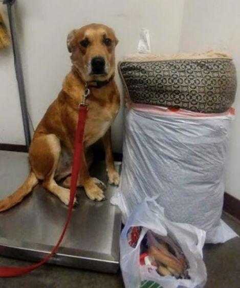 Niemand will diesen Hund nehmen –ein Foto verändert sein