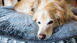 Γιατί οι γυναίκες προτιμούν να κοιμούνται με τον σκύλο τους παρά τον σύντροφό