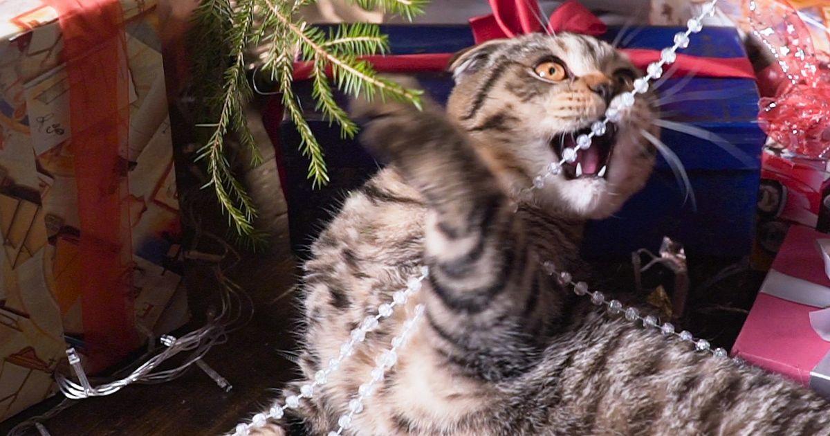 Cats Vs Christmas Trees.Cats Versus Christmas Trees Huffpost Uk