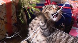 Cats Versus Christmas