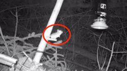 먹을 걸 향해 5시간 넘게 점프하는 의지의 생쥐가 카메라에