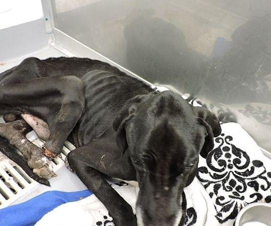 Abgemagerter Hund kaute sich sein Bein ab – jetzt kämpfen Tierschützer um sein