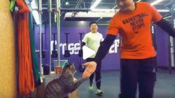 «High Five» από τη γάτα-προπονήτρια στο