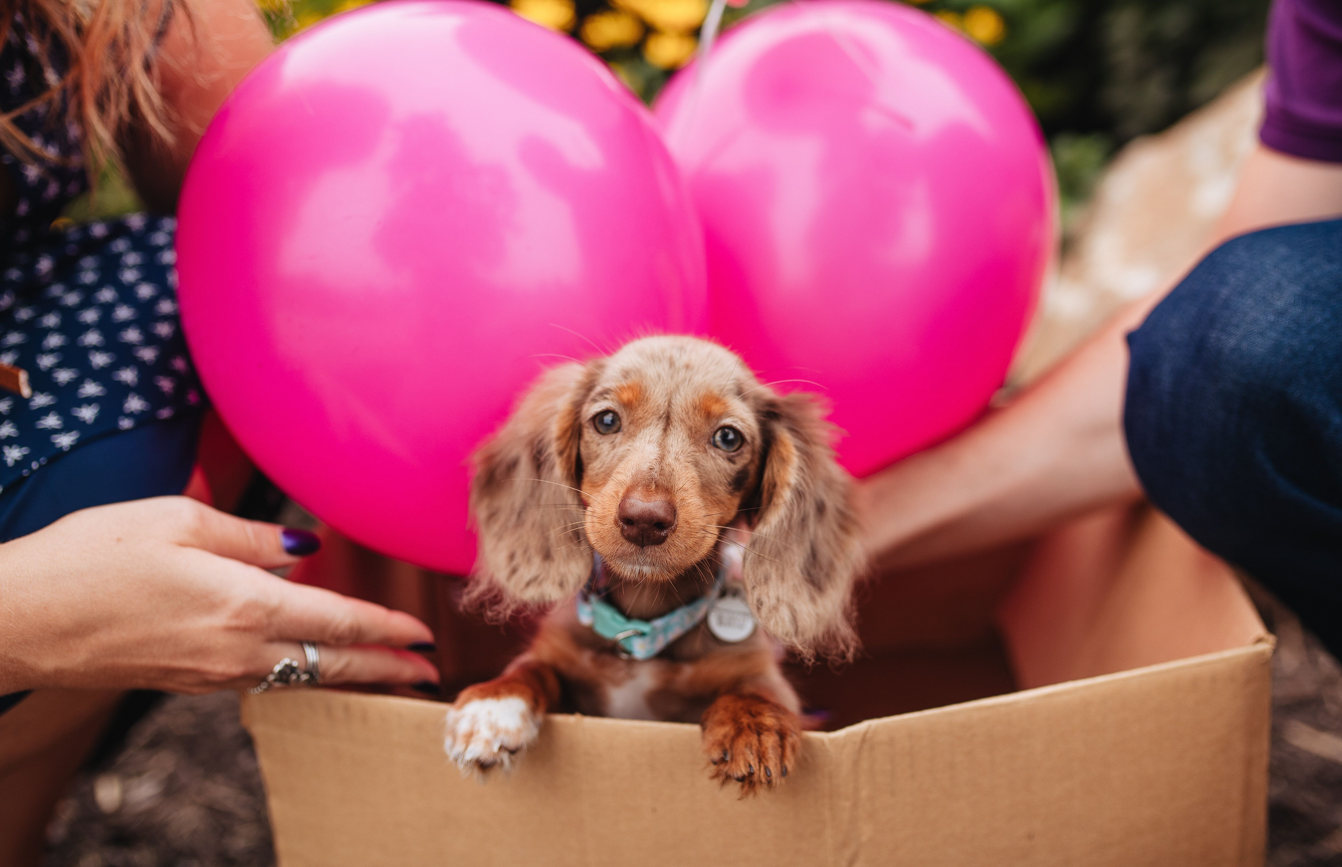 15 Dog Reveals That Are Cuter Than Gender Reveal Parties Huffpost Life