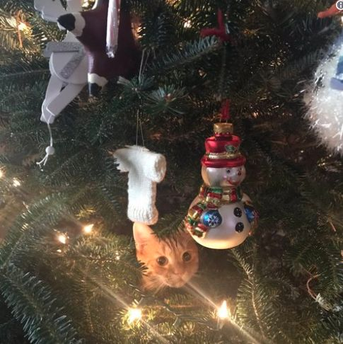 Cats In Christmas Trees, A Dog Goalie And 3 Other Cute Animals To End The