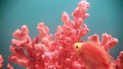 Le Living Coral sera la couleur de 2019, selon