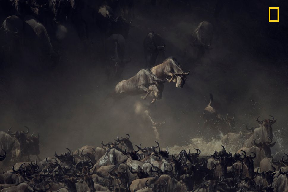 It was early morning when I saw the wildebeests crossing Tanzania's Mara River. The layering of dust, shade, and sun ov