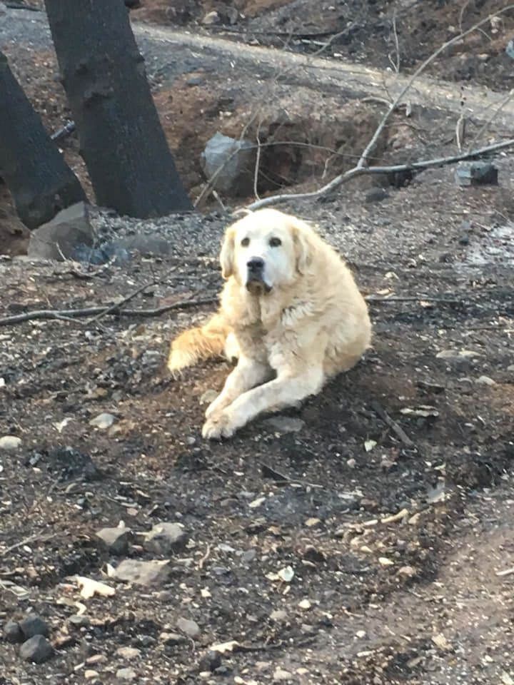 Madison on the charred remains of his home in Paradise, California.