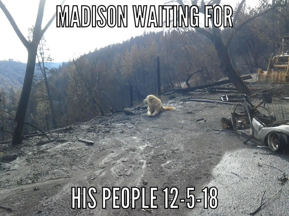 Dog found waiting for owners where house once stood after California wildfires