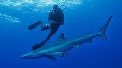 Kαρχαρίας επιτέθηκε και τραυμάτισε σοβαρά σέρφερ στις ακτές της