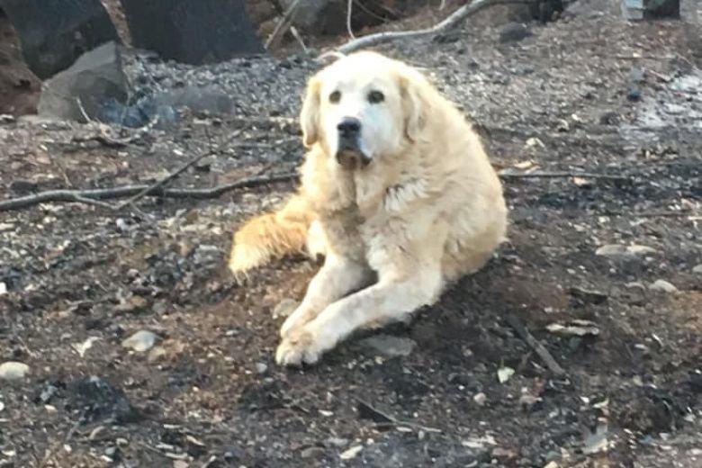 Σκύλος περίμενε τους ανθρώπους του ενάμισι μήνα, έξω από το καμένο σπίτι
