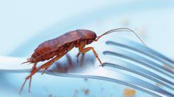 중국에서는 지금 바퀴벌레가 음식물 쓰레기를