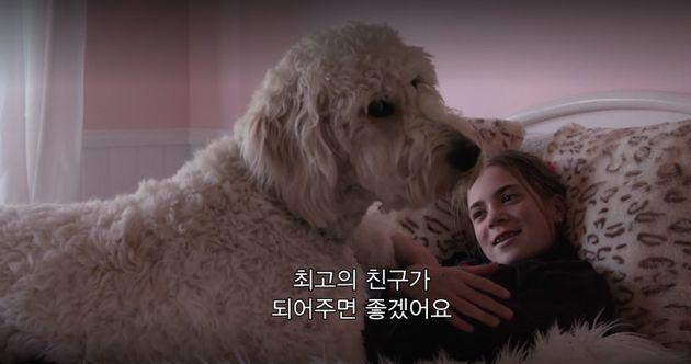 '개와 함께' 예고편