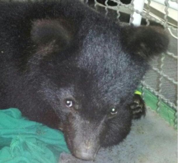 한국에는 복원시켜야 하는 곰과 죽어야 하는 곰이 따로