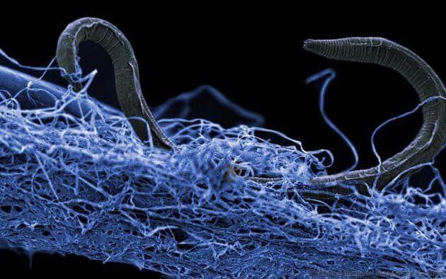 Βακτήρια «ζόμπι» ανακαλύφθηκαν κάτω από τη γη και τους