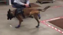Δεν έχετε δει ποτέ σκύλο να περπατάει τόσο αστεία (γιατί ποτέ κανένας δεν φόρεσε