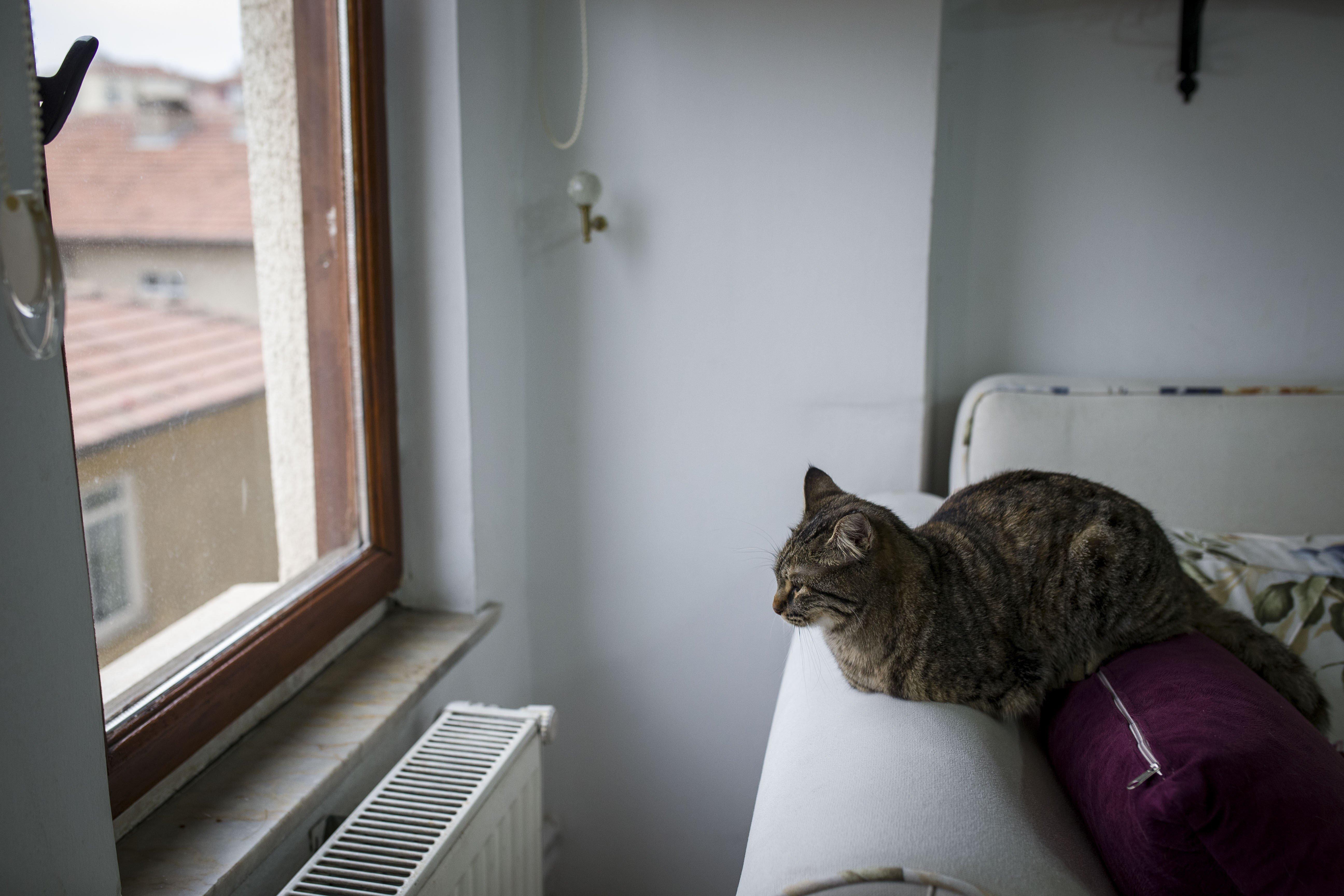 Weil eine Katze sich bemerkbar machte, rettete sie ihre Besitzer. (Symbolbild)