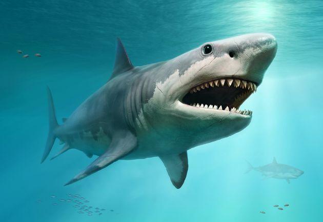 Το τέλος του μεγαλύτερου καρχαρία: Γιατί εξαφανίστηκε ο