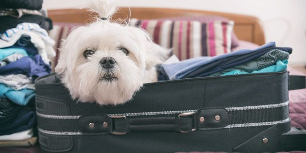 4 Rules To Live By Before Taking Your Pooch To A Foreign