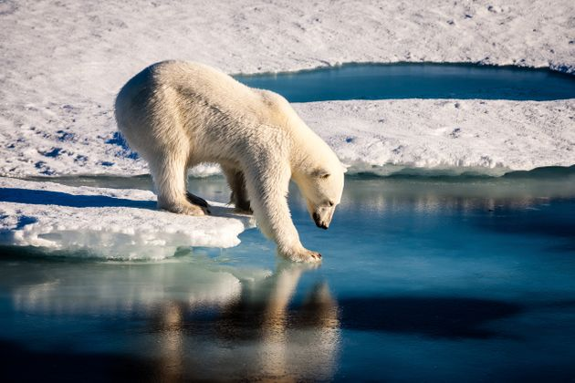We Need To Make Climate Change Part Of The Curriculum If We Are To Prevent The 'Collapse Of