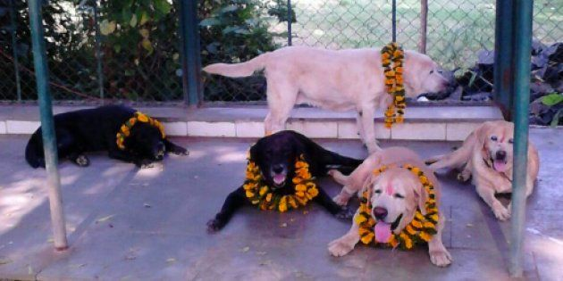 File photo of Max, Sultan, Tiger, Caesar in their farm house. They were part of the police force during...