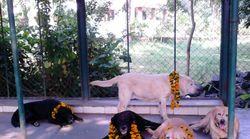 26/11 Hero Dog Passes Away In Mumbai Activist's