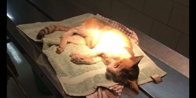 Sad Mother Cat Dies After Human Mows Down One of Her Kittens And Throws Out The