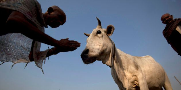 How The British Gave A Fillip To Cow Vigilantism In Colonial