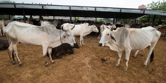 BJP Supporter Killed In Clashes Over Cow Smuggling In