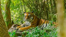 Maharashtra's Favourite Tiger Missing For 4 Months, State Seeks PM Modi's