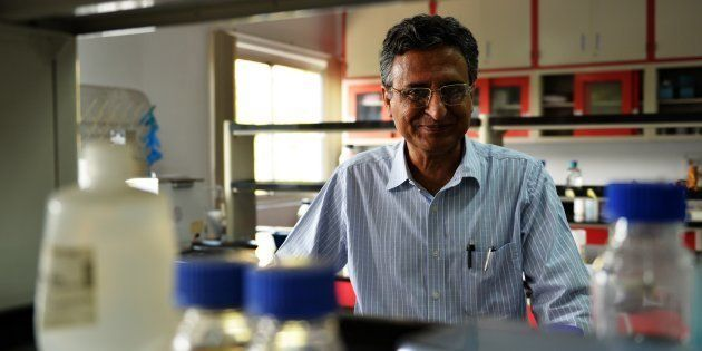 In this photograph taken on November 6, 2014, Indian researcher Deepak Pental poses in his laboratory...