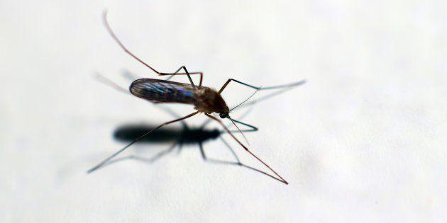First Confirmed Chikungunya Death In Delhi Recorded At Sir Ganga Ram