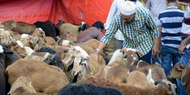 An Indian Muslim inspects goats at a livestock market for the sacrificial Eid ul Azha festival in Hyderabad...