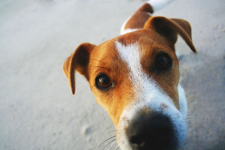 Dogs have a powerful sense of smell.