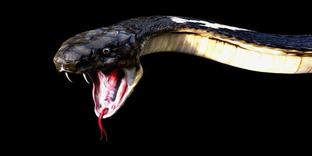 Man Killed While Shooting A Video Of Snake Wrapped Around His