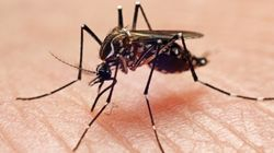 It Isn't Even Monsoon Yet But Delhi Has Reported Alarming Rise In Dengue And Chikungunya