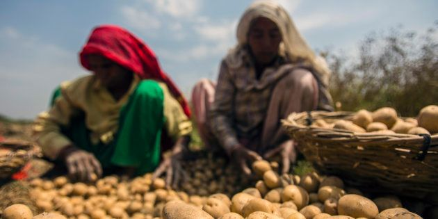 Untangling The Noose Around The UP Farmer's