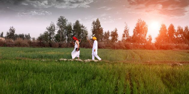 Farmer walking in the middle of green wheat field during early