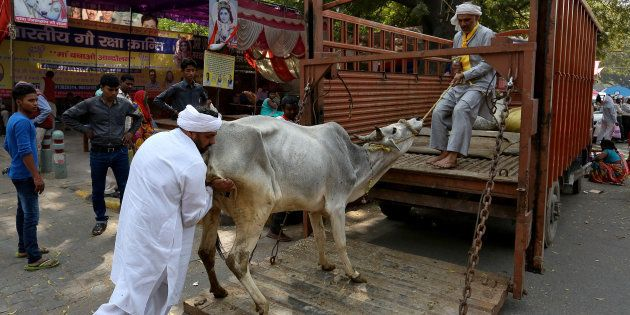 3 Suspected Of 'Cow Smuggling' Thrashed By Mob In Delhi's Kalkaji, Later