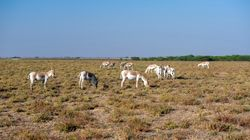 Why Conservationists Are Very Worried About Gujarat Tourism's 'Come Race With'