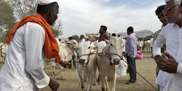 People For Animals Activist Arrested In Connection With Attack On Cattle Traders In Delhi's Kalkaji