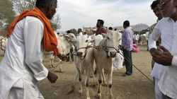 People For AnimalsActivist Arrested In Connection With Attack On Cattle Traders In Delhi's Kalkaji