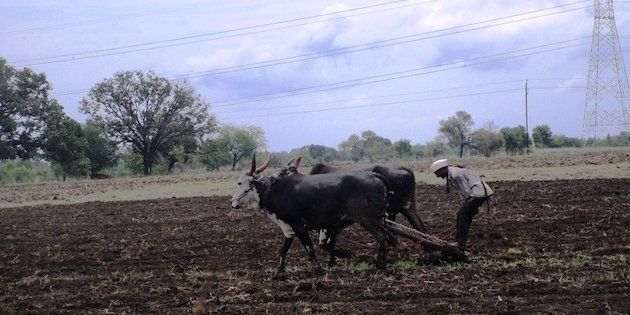 Marathwada farmers are fighting against all odds in the current kharif