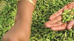 Drought Is Sapping The Essence Of Kerala's Cardamom