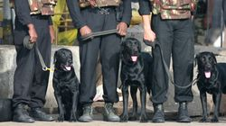 Delhi Police Will Soon Get 35 Sniffer Dogs From The Army To Cope With Rising Terror