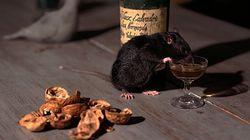 Blame The Rats, Says Bihar Police After Seized Liquor Bottles Go