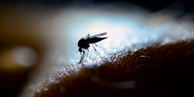 Why 8% Of India's Population Accounts For 46% Of The Total Malaria