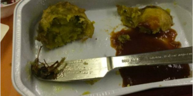 Cockroach Found In Meal Served On Air India Flight, Probe